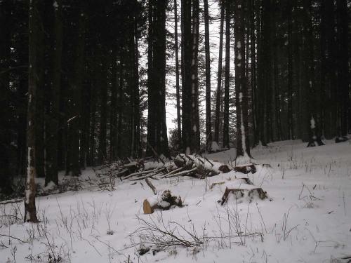 Alti copaci taiati in padurea de linga orasul Busteni, in Parcul Natural Bucegi