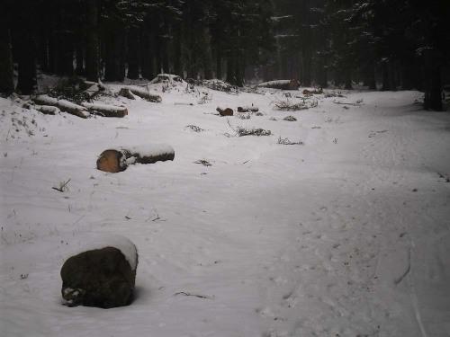 Padure defrisata la Busteni, de-a lungul unui drum forestier, in Parcul Natural Bucegi